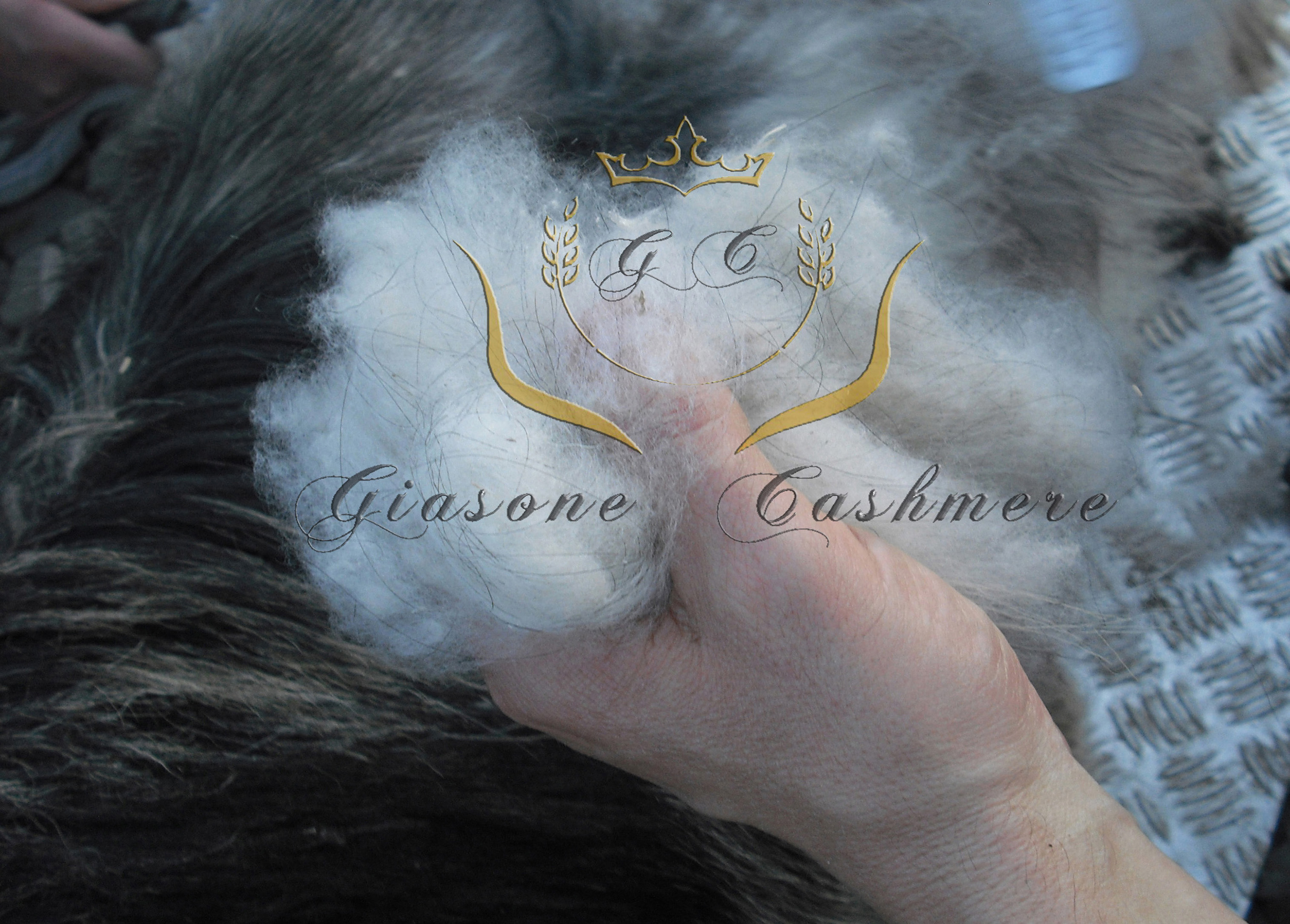 Cashmere -Made-in-Italy